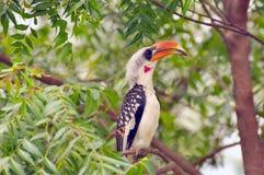 Oiseaux d'Afrique de l'Est Images libres de droits