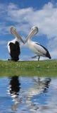 Oiseaux d'amour Image libre de droits