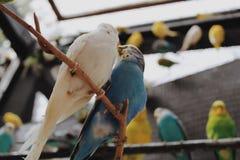 Oiseaux d'amour et un arbre Photographie stock libre de droits