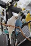 Oiseaux d'amour et un arbre Photographie stock