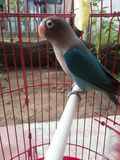 Oiseaux d'amour et un arbre Photo libre de droits