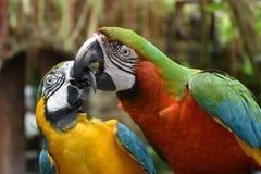 Oiseaux d'amour et un arbre Photos libres de droits