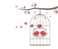 Oiseaux d'amour sur la cage Images stock