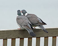Oiseaux d'amour sur le banc côtier Image libre de droits
