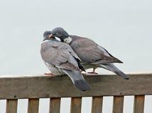Oiseaux d'amour sur le banc côtier image stock
