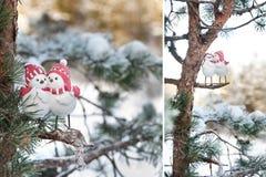 Oiseaux d'amour sur un arbre en hiver Photo libre de droits