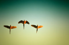 Oiseaux d'ara Image libre de droits