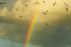 Oiseaux d'arc-en-ciel et de vol Photos libres de droits