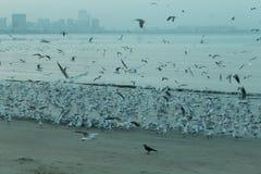 Oiseaux d'entraînement de Marin Image stock