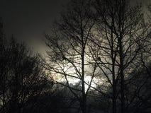 Oiseaux d'hiver sur des arbres Photo stock