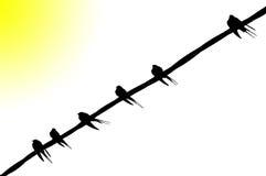 Oiseaux d'isolement Photos libres de droits