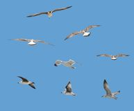 Oiseaux d'isolement Image stock