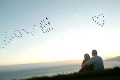 Oiseaux dans l'amour de charme de ciel Photo libre de droits