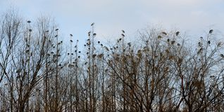 Oiseaux dans l'arbre Photo stock