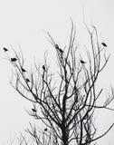 Oiseaux dans l'arbre Images libres de droits