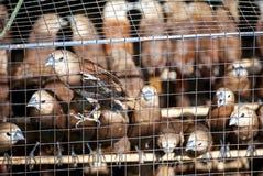 Oiseaux dans la cage sur le marché d'oiseau Image stock