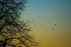 Oiseaux dans la formation Photographie stock libre de droits