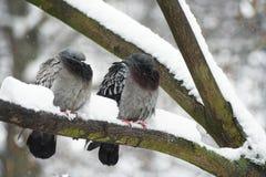 Oiseaux dans la neige image stock