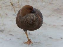 Oiseaux dans la volière images stock