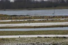 Oiseaux dans le beau paysage d'hiver Photo libre de droits