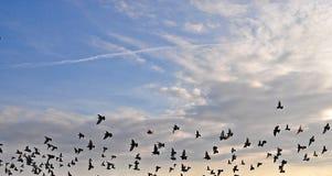 Oiseaux dans le ciel Images libres de droits