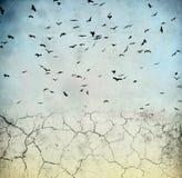 Oiseaux dans le ciel Image stock