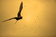 Oiseaux dans le coucher du soleil Images libres de droits