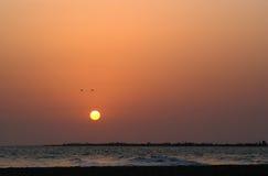 Oiseaux dans le coucher du soleil Photos stock