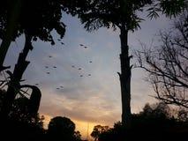 Oiseaux dans le coucher du soleil photos libres de droits