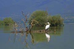 Oiseaux dans le lac paisible photos stock