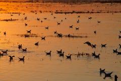 Oiseaux dans le lever de soleil Photo libre de droits