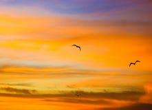 Oiseaux dans le lever de soleil orange Photographie stock libre de droits