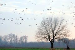 Oiseaux dans le mouvement Images libres de droits