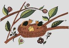 Oiseaux dans le nid avec des oeufs Photos libres de droits