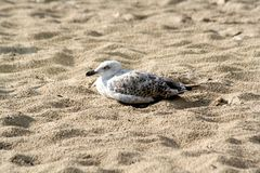 Oiseaux dans le sable de la plage Photographie stock