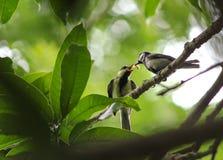Oiseaux dans les branches Images libres de droits