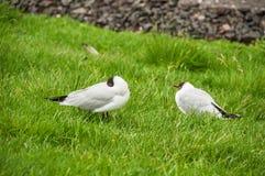 Oiseaux dans leur habitat naturel image libre de droits