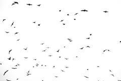 Oiseaux dans un ciel Photo libre de droits