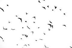 Oiseaux dans un ciel Photos libres de droits