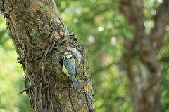 Oiseaux de alimentation de petit oiseau avec chaud Photo stock