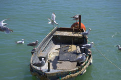 Oiseaux de bateau de pêcheur photos libres de droits