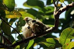 Oiseaux de bavard Photographie stock libre de droits