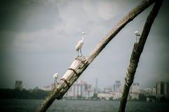 Oiseaux de bord de la mer Photographie stock