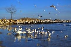 Oiseaux de bord de la mer d'hiver Photographie stock libre de droits
