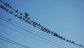 Oiseaux de câble Photos libres de droits