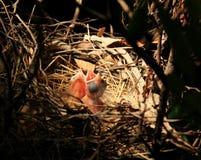 Oiseaux de chéri Photos libres de droits