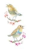 Oiseaux de chant d'aquarelle Images libres de droits