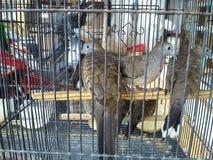Oiseaux de colombe Image libre de droits