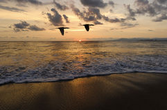Oiseaux de coucher du soleil d'océan Photo libre de droits