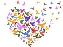Oiseaux de couleur volant avec le coeur Photos stock